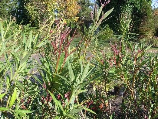 ma plan te jardin quartiers d 39 hiver pour les plantes frileuses en pot. Black Bedroom Furniture Sets. Home Design Ideas