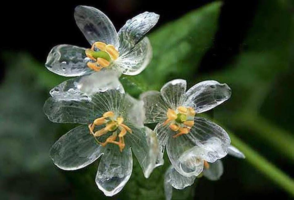 Imagenes De Flores Bajo La Lluvia - Flores bajo la lluvia (BEST SELLER): Amazon es
