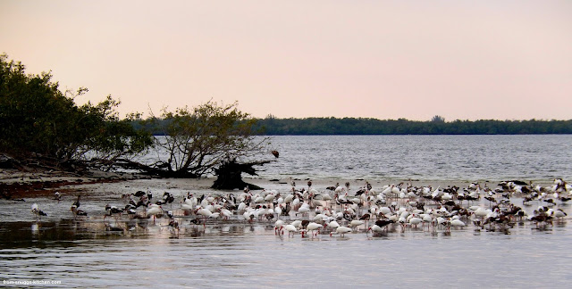 Vogelinsel Cape Coral