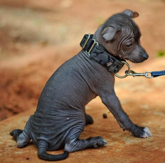 The dog in world: 6 ne...