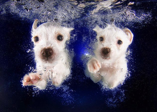 adorable-puppy-2