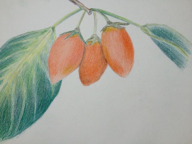 Spanish cherry