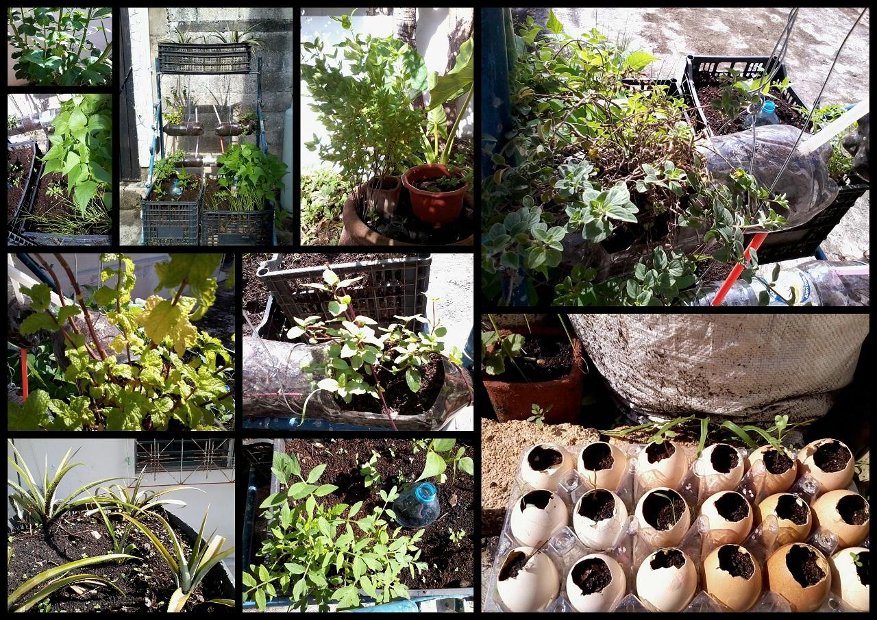 Como hacer mi jardin foro de infojardn como ordenar mi for Como hacer mi jardin