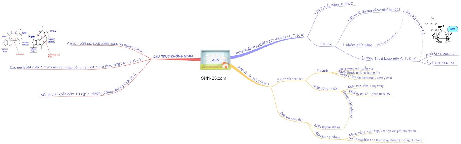 Sơ đồ tư duy sinh học 12: cấu trúc adn