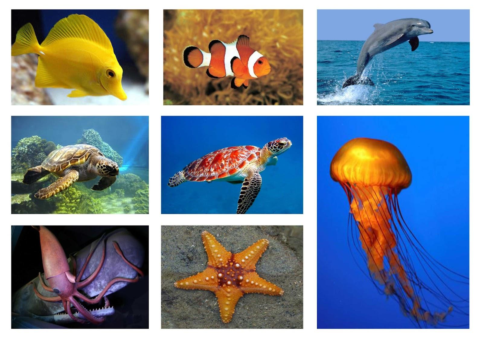 wallpaper kehidupan laut