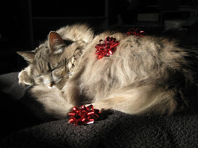sleeping long haired cream colored kitty with two red bows