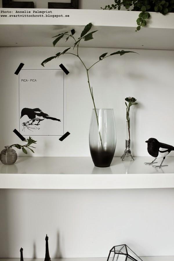 diy, snygga till en vas, sprayfärg, spraya, svart, svarta, svart och vitt, svartivta, konsttryck, skata, skator, skatorna, fågel, fåglar, vit hylla, hyllor, inspiration, tips, gröna blad i vaser, klämma vas, skata av trä, eiffeltorn