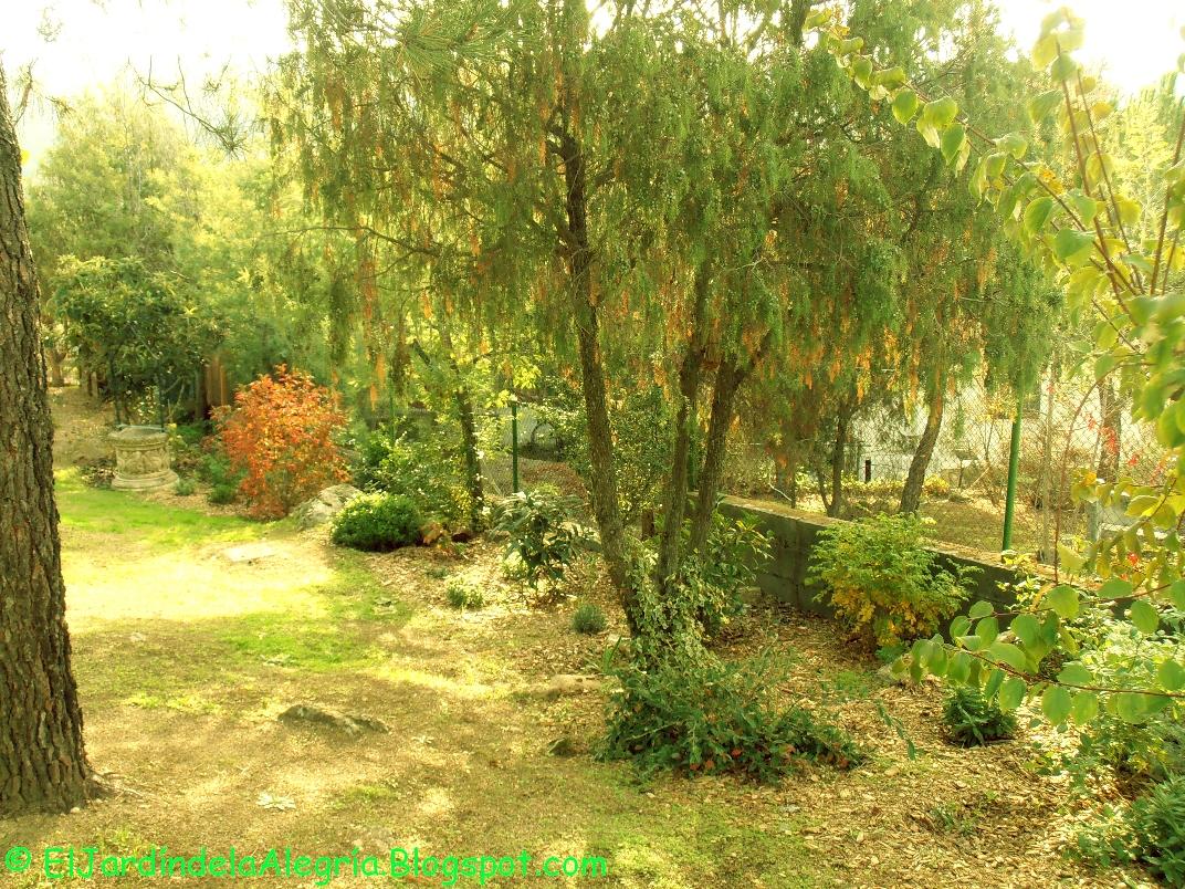 El jard n de la alegr a octubre sereno y dulce for Cancion el jardin de la alegria