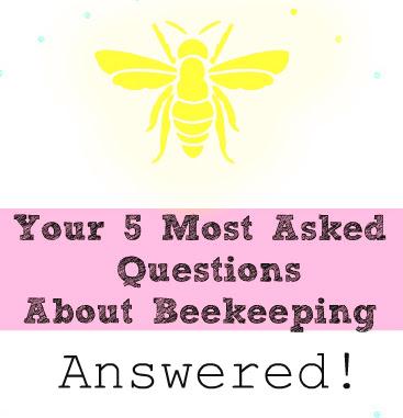 beekeeping questions
