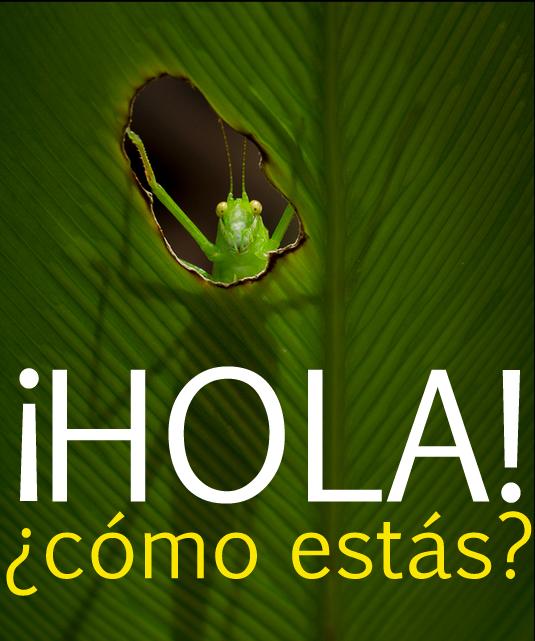 Hola Como Estas Response Related Keywords - Hola Como ...