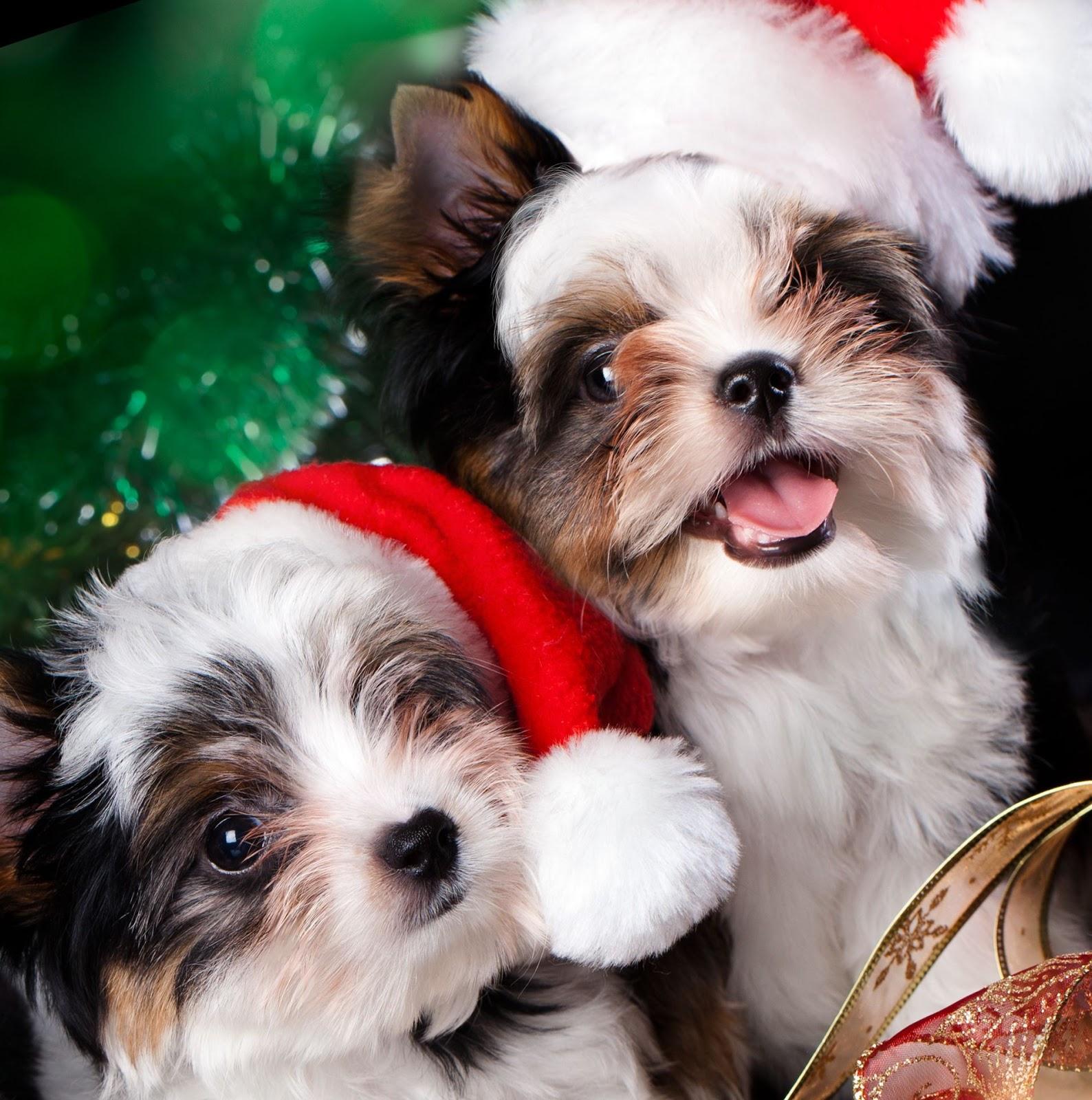 Banco de im genes gratis 12 mascotas navide as para - Dibujos tarjetas navidenas ...
