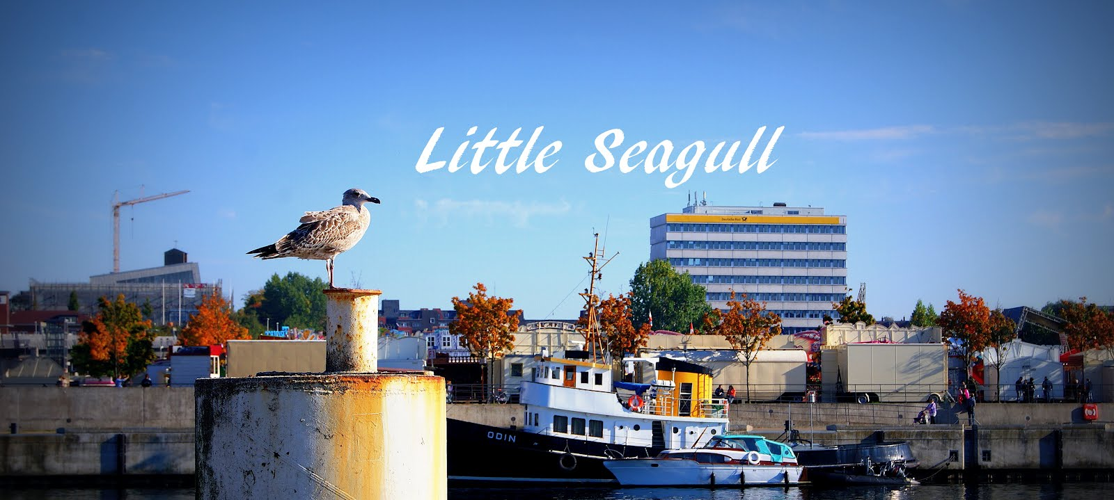 little seagull