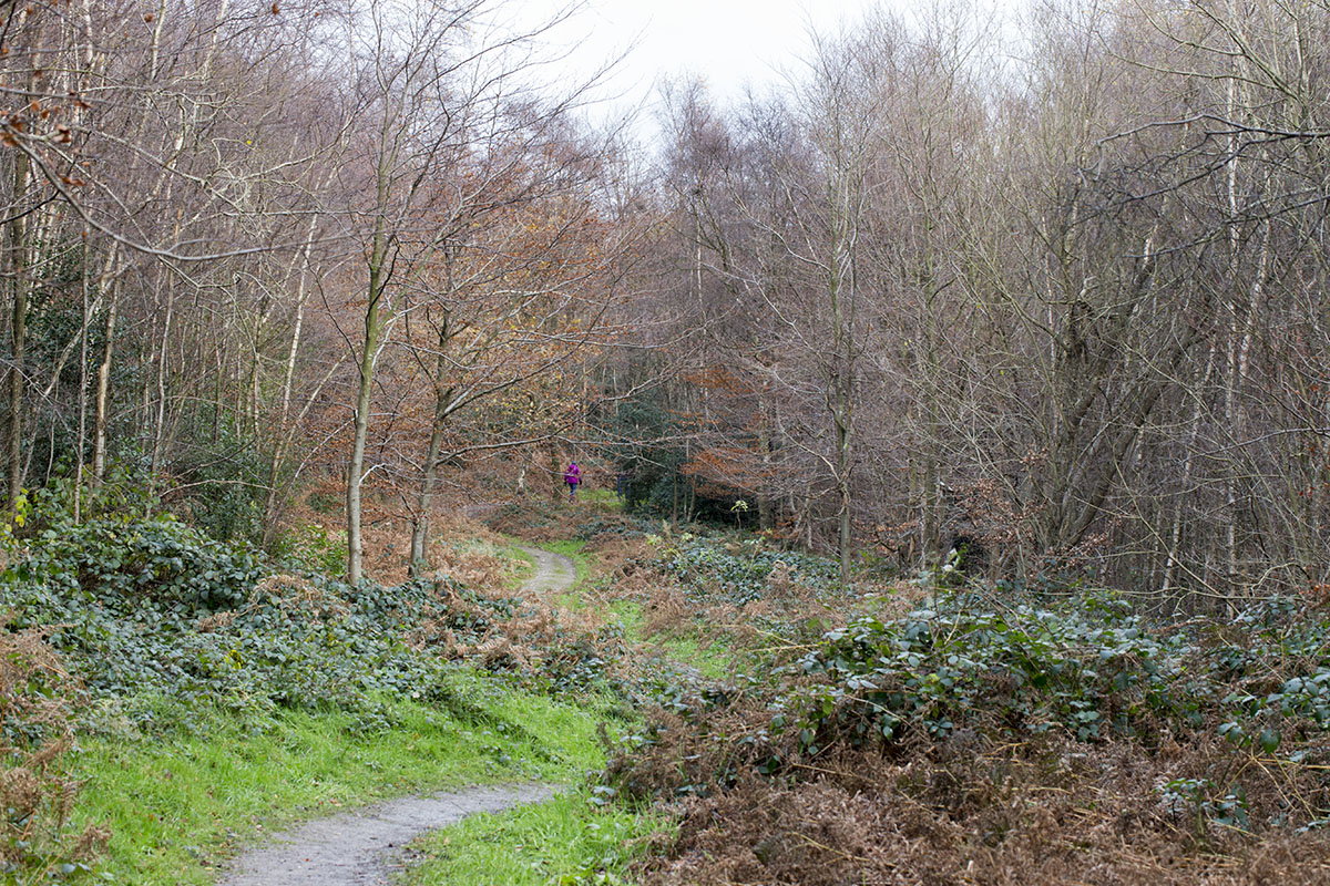 The path down into the wood.  Toy's Hill, 7 December 2013.