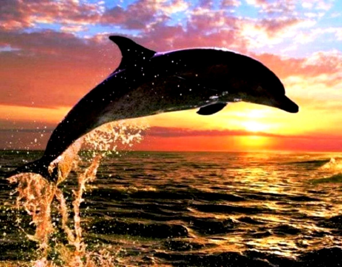 Dolphin sunset   160868   High Quality and Resolution
