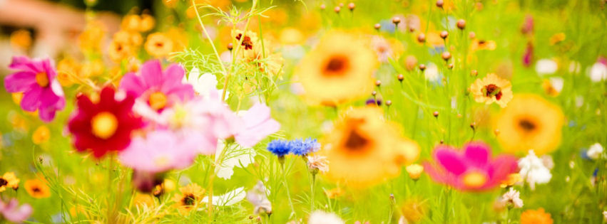 Vivid flowers facebook cover