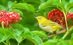 Encantos da Natureza