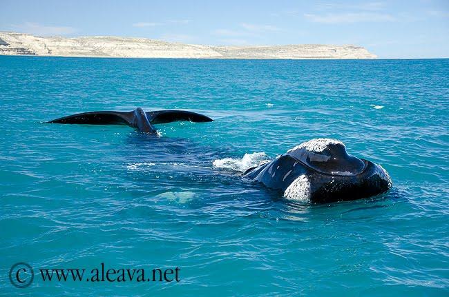Walvisseizoen,Walvissen kijken Valdés Schiereiland