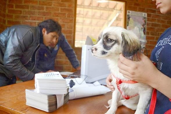 Métodos electrónicos registro de mascotas