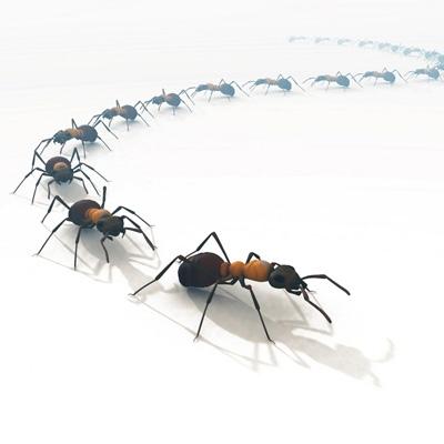 Fatto in casa formiche in casa rimedi naturali per - Le formiche in casa ...