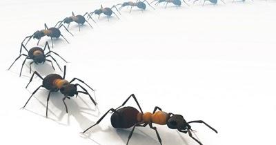 Fatto in casa formiche in casa rimedi naturali per allontanarle - Formiche in casa ...