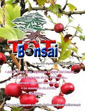 DR 16 TOT Bonsai