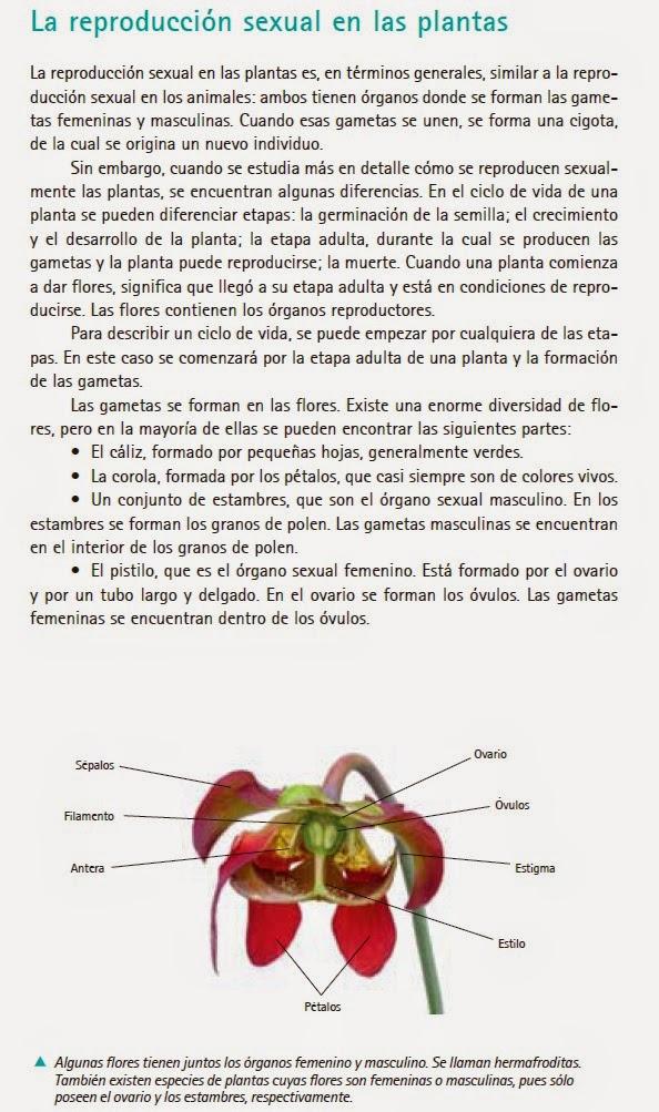 Ranita de darwin reproduccion asexual de las plantas