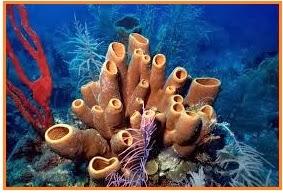 Porifera memiliki sel sel yang bertugas untuk mengedarkan makanan