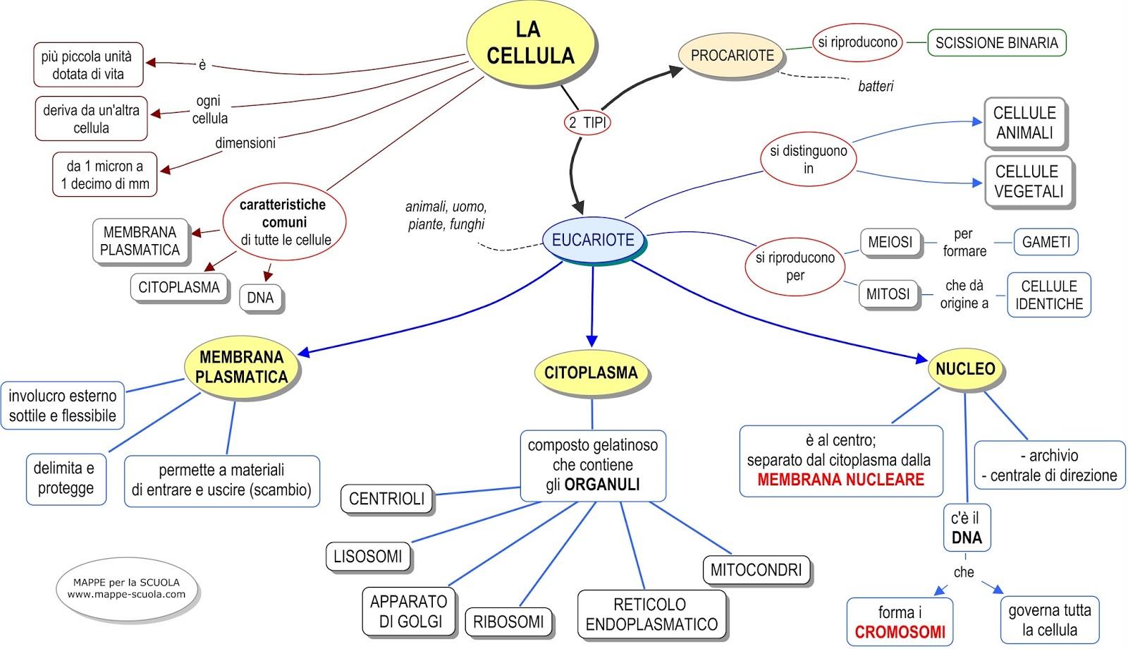 Célèbre MAPPE per la SCUOLA: LA CELLULA, EUCARIOTA e PROCARIOTA NL51