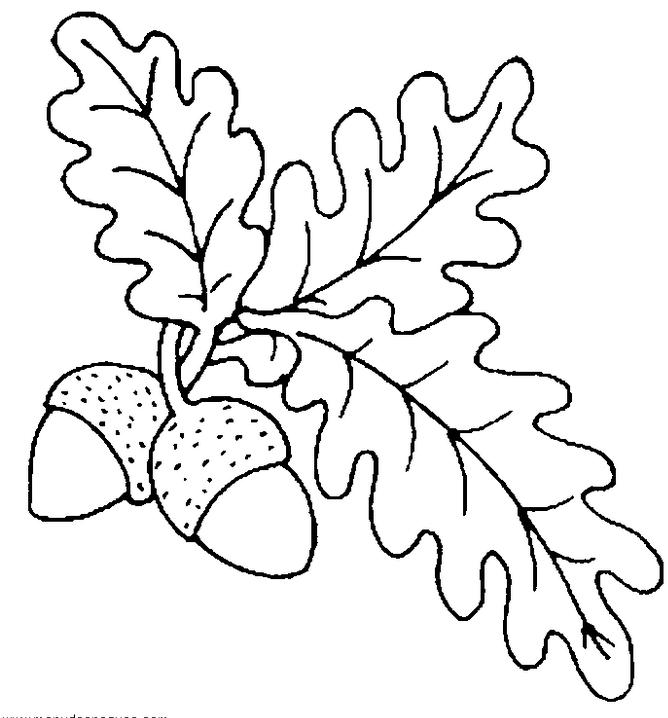 Frutas del invierno para colorear - Imagui