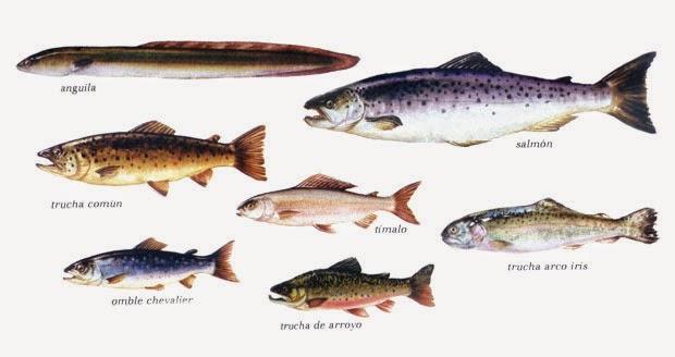 Peces crustaceos y moluscos for Variedad de peces