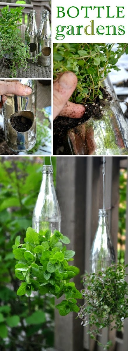 Gardening In Bottle : DIY : herb garden in bottles - My Favorite Things