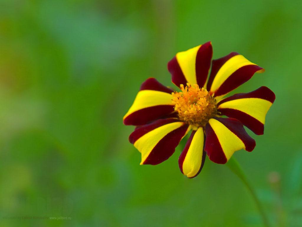 mobile screensaver wallpaper flowers - photo #44
