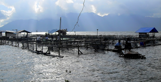 Budidaya Ikan Tawar Di Danau Maninjau