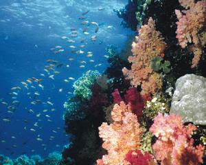 Great Barrier Reef Marine Park Zoning Plan