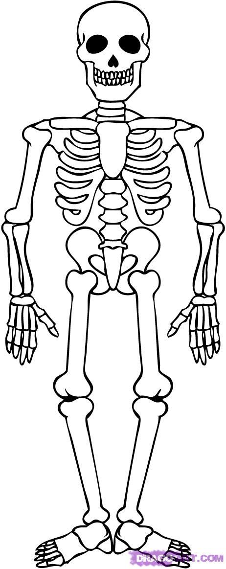 free axial skeleton coloring pages - photo#17
