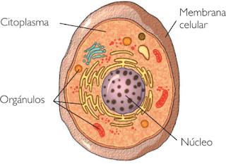 Partes de la célula.
