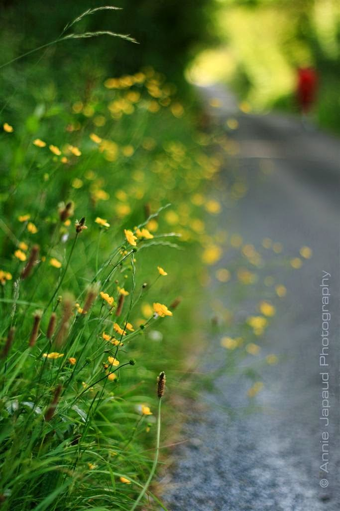 road, grass, summer, green