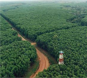 Dan pengertian dari hutan tanaman industri atau hti adalah hutan
