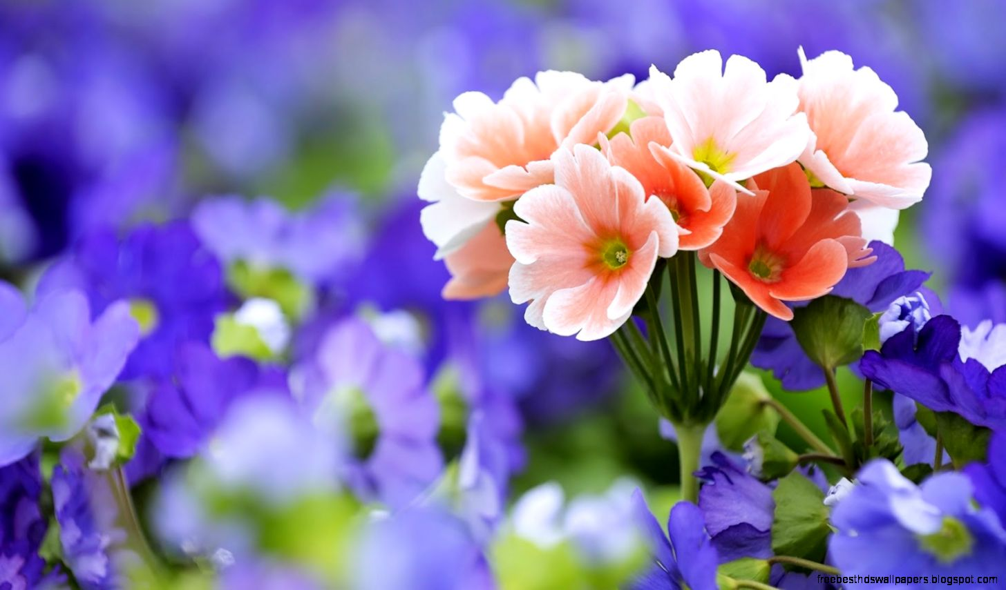 Very Pretty Flowers Pictures Free Best Hd Wallpapers