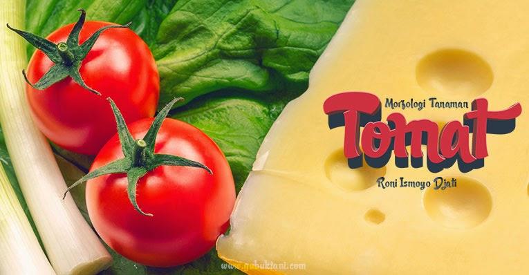 Gubuk tani morfologi tanaman tomat buah tomat merupakan salah satu jenis sayuran buah yang sangat dikenal oleh masyarakat rasa buah tomat adalah manis manis segar yang dapat memberikan ccuart Images