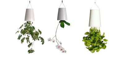 Vasos pendurados no tecto de pernas para o ar (conceito Boskke)