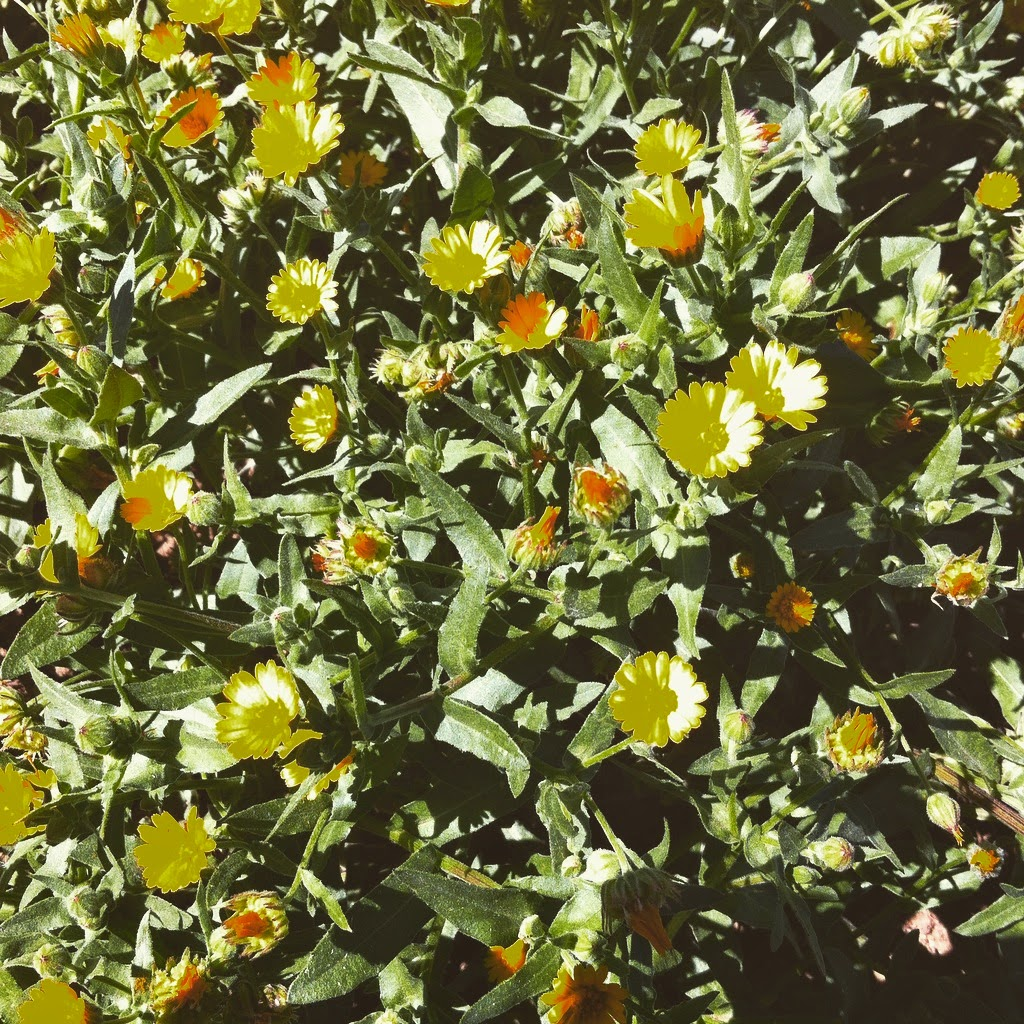 Floració [3]