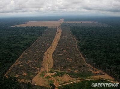 Amazônia: QUAL É O CÓDIGO DA NOSSA ESQUERDA?