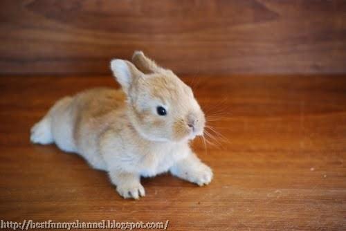 The cute small bunny