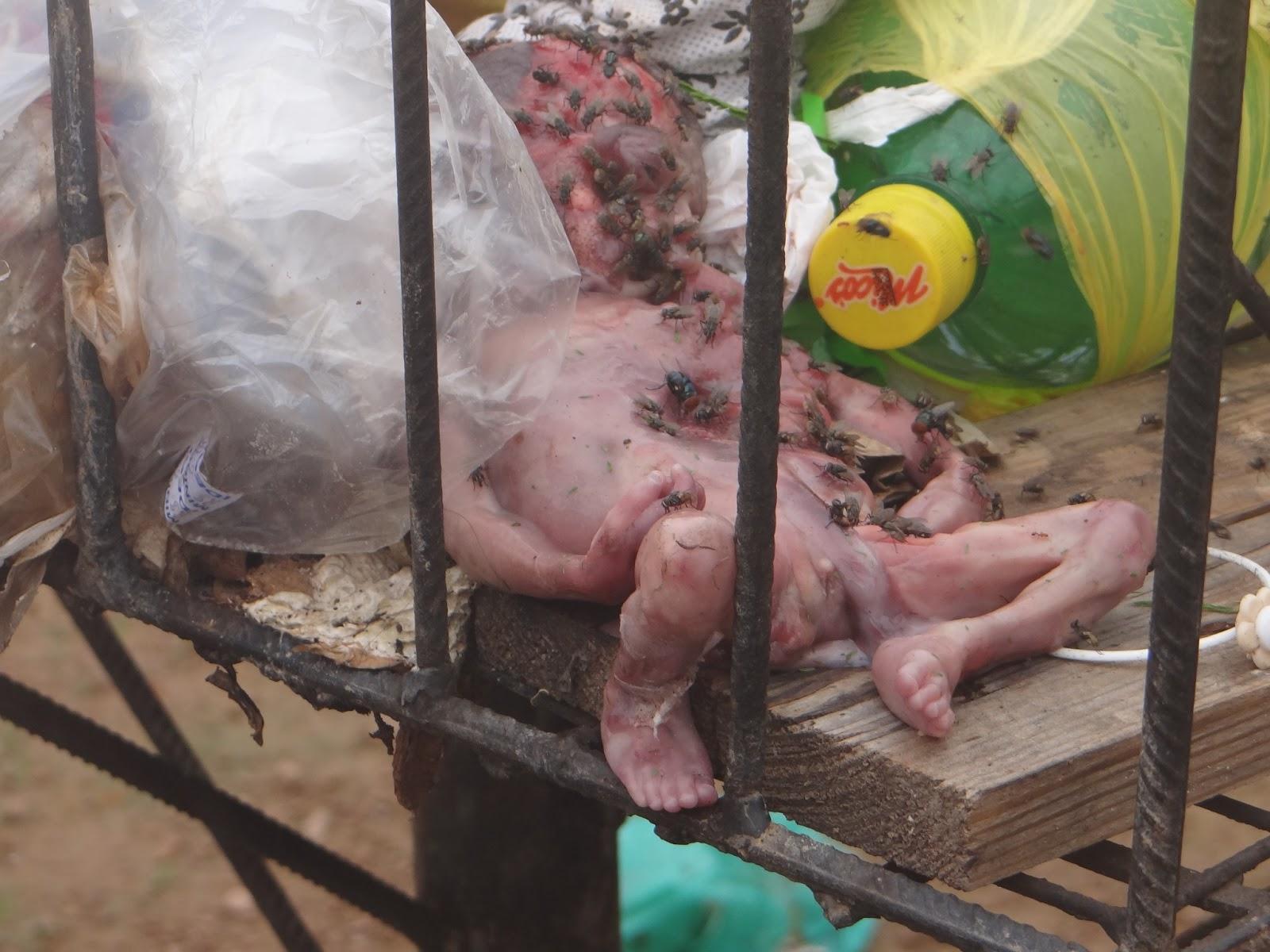 4 batalh o servir e proteger feto encontrado no meio do lixo - Feto de 4 meses fotos ...