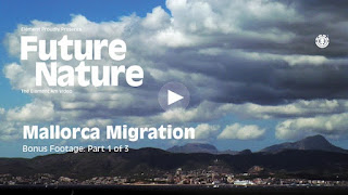 Element Skateboarding - Future Nature 'Mallorca Migration'