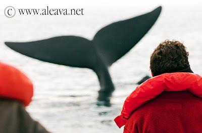 Walbeobachtungen Halbinsel Valdes