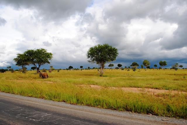 Mikumi National Park Tembea Tanzania