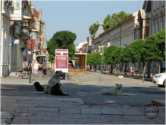 Brăila Strada Mihail Eminescu