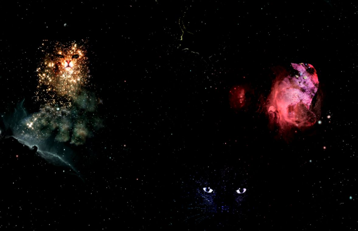 Space cat tumblr backgrounds wallpapers gallery view original size voltagebd Image collections